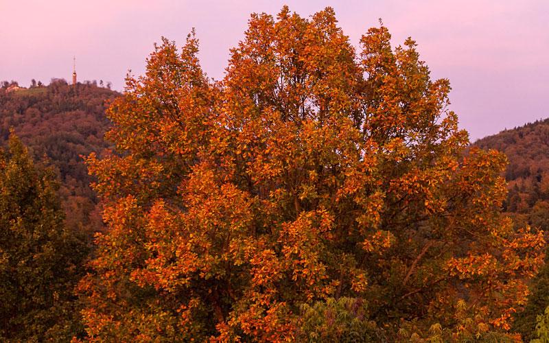 Herbst in der Villa Belveder