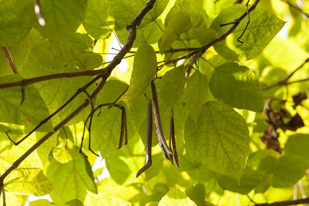 Bäume - Villa Belveder